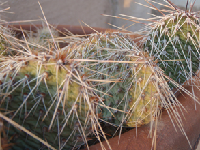 Prickly Situation